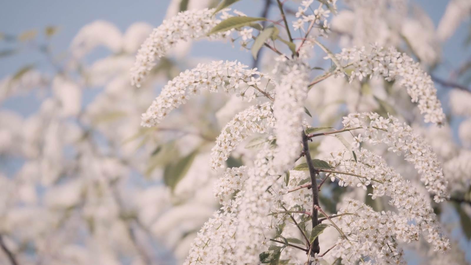 Regents Park Travel Video